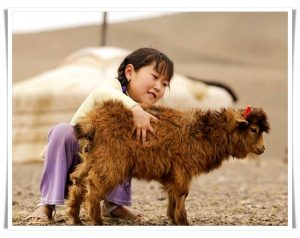 little girl with cashmere goat in Mongolia